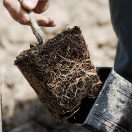 Plant en conteneur